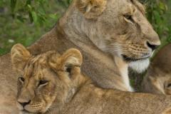 Mara Plains 200_400 0158-Edit-3