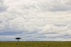 Mara Plains 70_200 0052-Edit-3