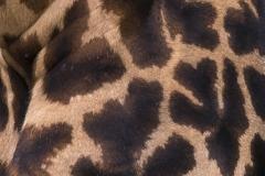 Mara Plains 70_200 0201