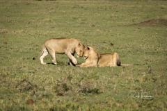 Mara Plains 70_200 0946-Edit-3