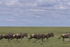Mara Plains 70_200 1067-Edit