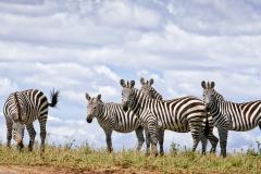 Mara Plains 70_200 1182-Edit