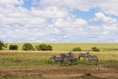 Mara Plains 70_200 1364