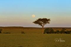 Mara Plains 70_200 2015-Edit